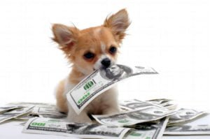 Puppy with money in mouth