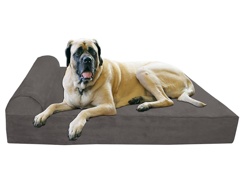 The Best Dog Bed For Your Dog