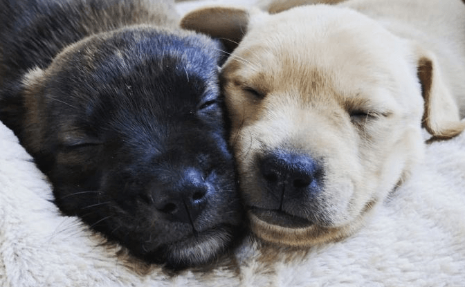 10 Ways to Celebrate other's Day for dog Moms