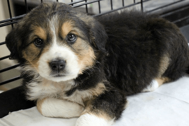 How to Crate Train a Puppy - 10 Mistakes to Avoid. Puppy in crate. Puppy in crate.
