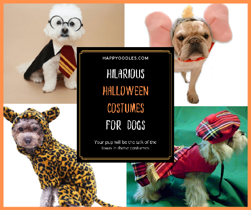 Hilarious Halloween Costumes for Dogs - Updated for 2020