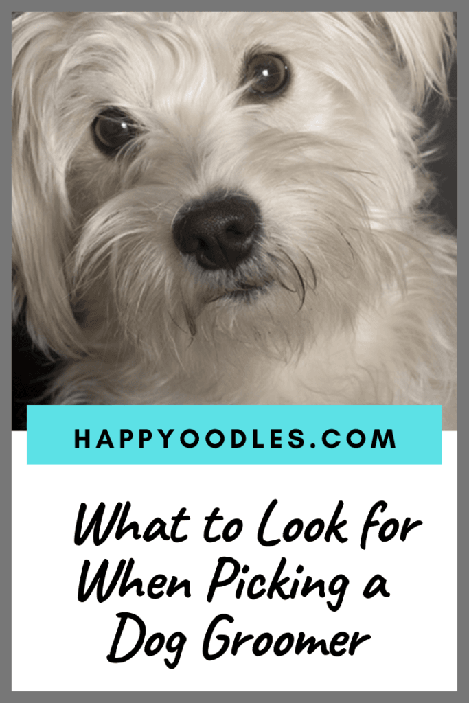 When picking a dog groomer people tend to focus on how their dog will look. Let's face it we all want our dogs to look great. While a good haircut is important, you need to focus on finding a clean, safe salon. You want a dog groomer that will care for your pup just like you do