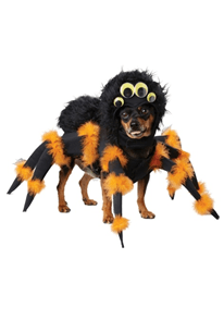 20 Hilarious Halloween Costumes for Dogs - Black and orange Spider on small dog