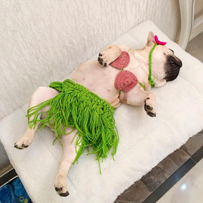 20 Hilarious Halloween Costumes for Dogs - Dog lying on back with green hula skirt on.
