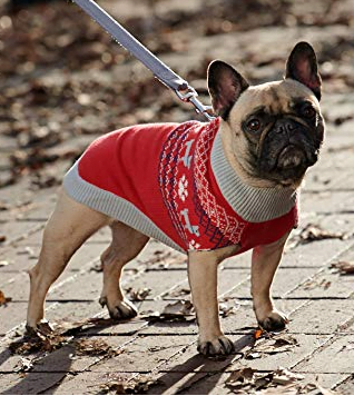 The Perfect Dog Christmas Sweater for 2020 Happy Oodles