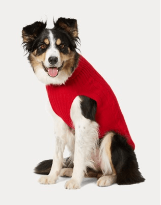 Red, cable knit, cashmere dog sweater.