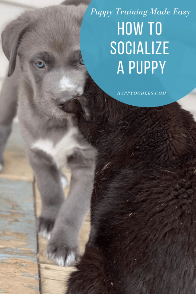 Puppy Training Made Easy How to Socialize a Puppy