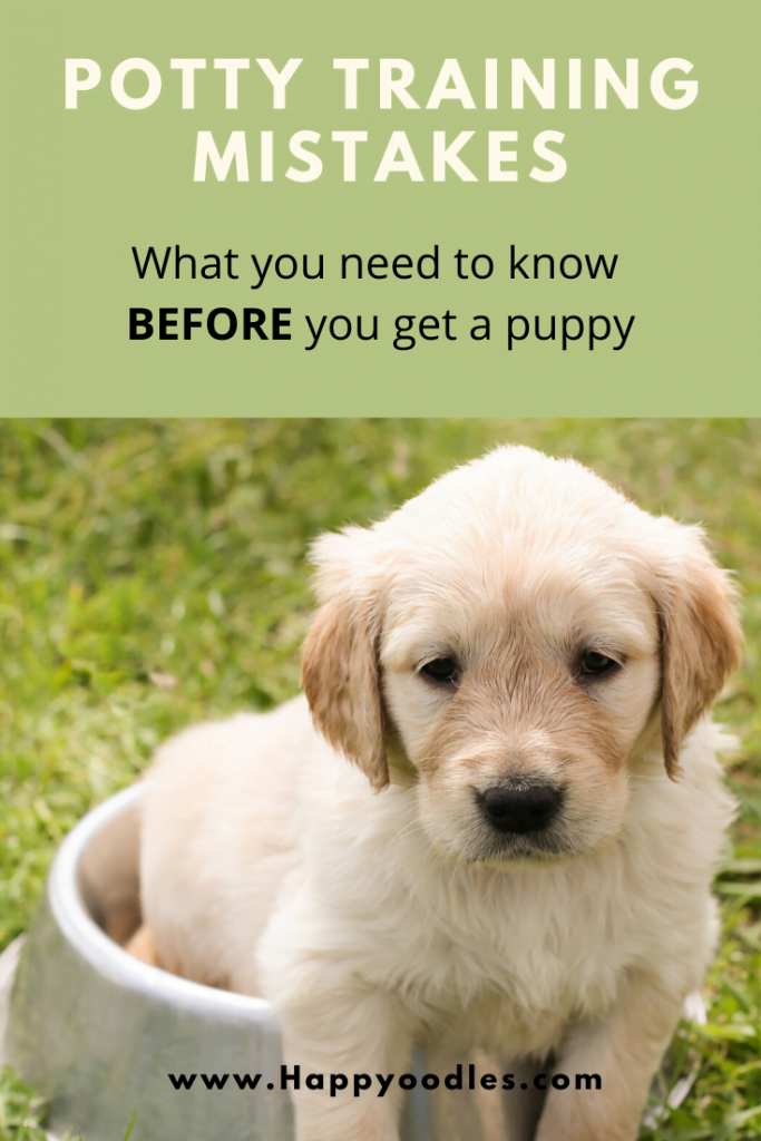 Puppy Potty Training Mistakes - What you need to know before you get a puppy by Happoodles.com Title pin
