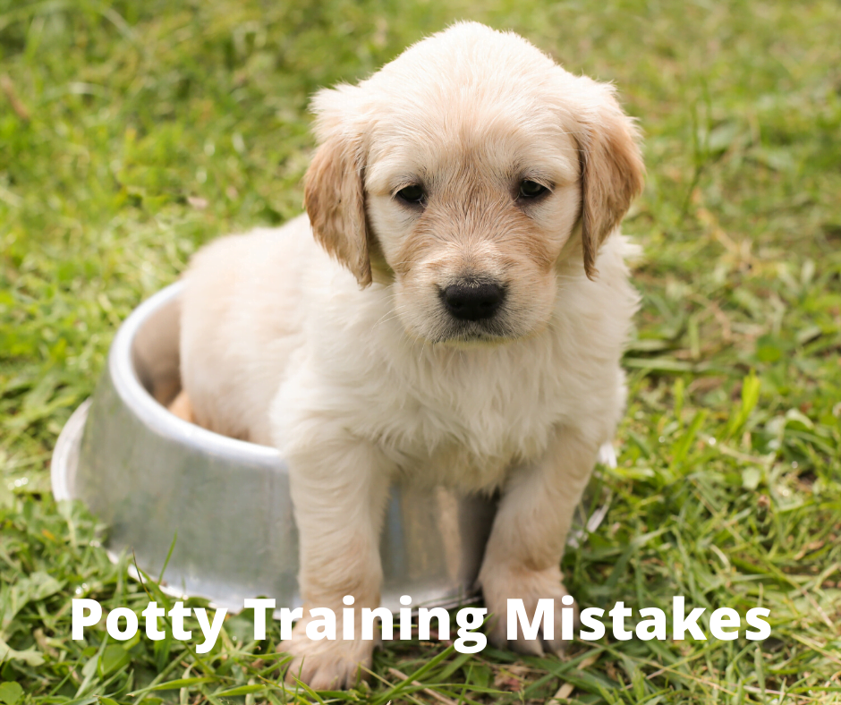 Potty Training Mistakes - What you need to know before you get a puppy