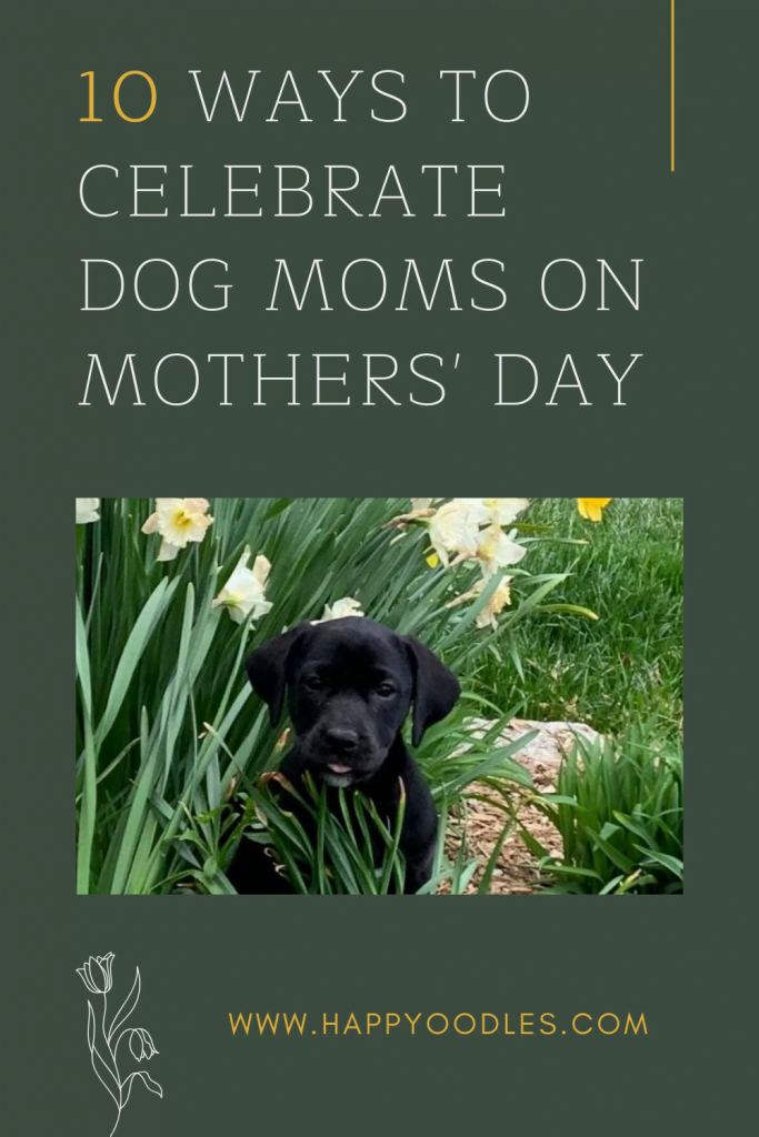 10 Ways to Celebrate Dog Moms on Mother's Day pin