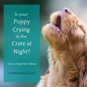 Puppy Crying in Crate at Night? Here's Help