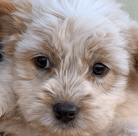 Puppy Training: Learn the Secret of Easy Puppy Training