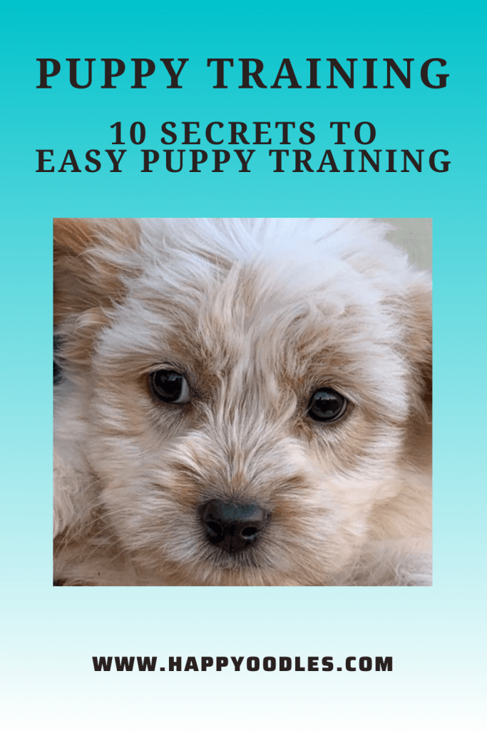 Puppy Training: 10 Secrets to Easy Puppy Training