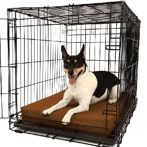 How to Crate Train a Puppy: 10 Mistakes to Avoid Crate