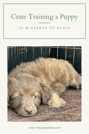 How to Crate Train a Puppy: 10 Mistakes to Avoid