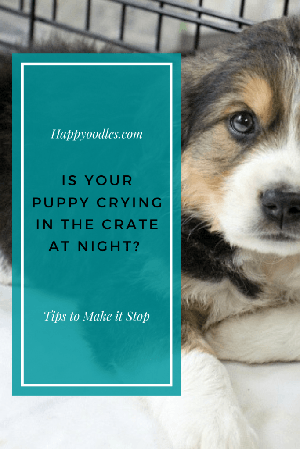 Puppy Crying in the Crate at Night? How to Help Them Sleep