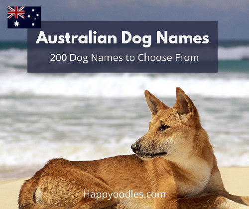 Australian Dog Names: 200 Dog Names to Choose From