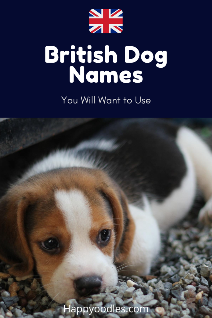 Happyoodles.com British dog names pin with puppy on cover