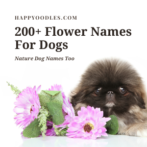 200 + Flower Names For Dogs: Plus Nature Dog Names - Happyoodles.com