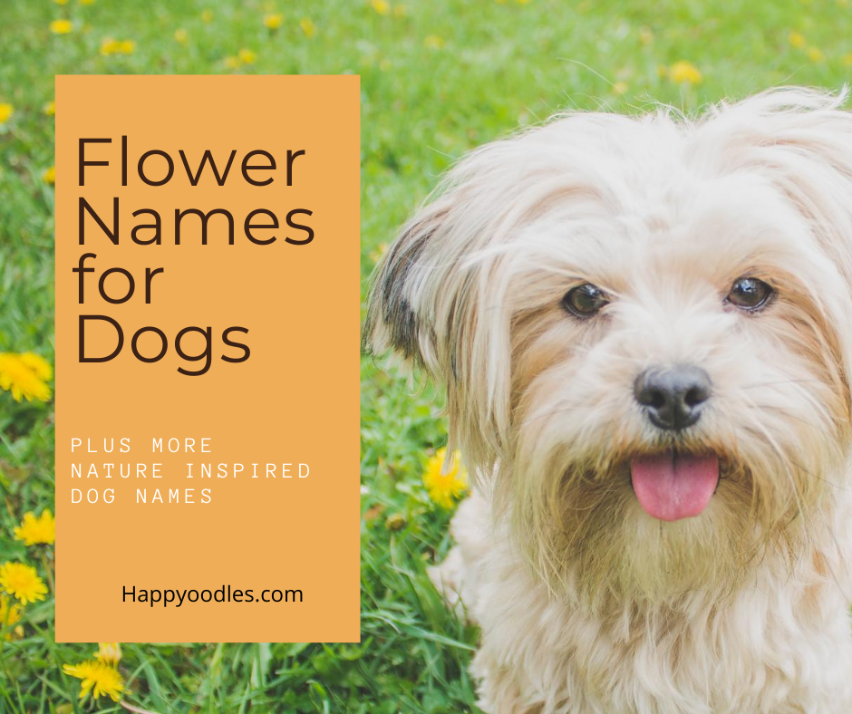 Flower Names For Dogs: Plus Nature Inspired Dog Names -  White dog in field of flowers