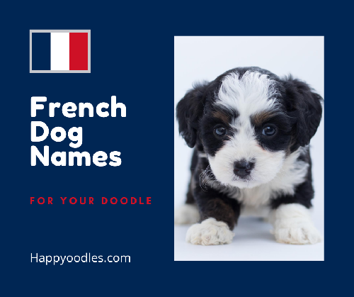 French Dog Names For Your Doodle - Navy background with puppy