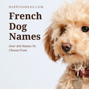 French Dog Names: Over 450 Names To Choose From - Happyoodles.com Cover page