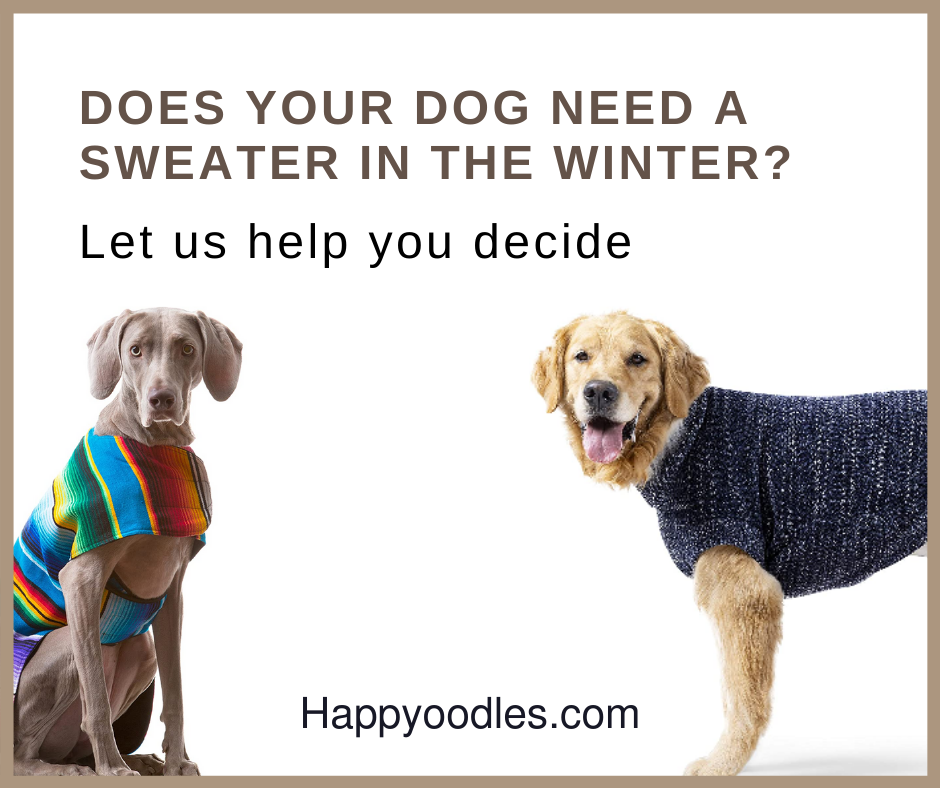 Does Your Dog Need a Sweater in the Winter?