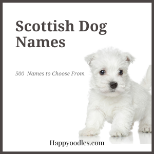 Scottish Dog Names: 500  Names to Choose From