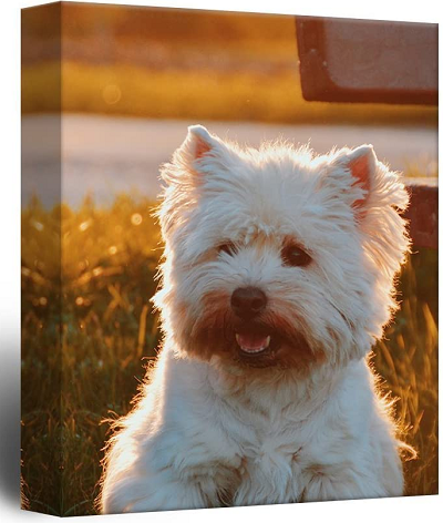 Pet Memorial Ideas For Dogs And Cats - Wall art featuring a westie