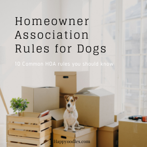 10 Common Homeowner Association Rules for Dogs