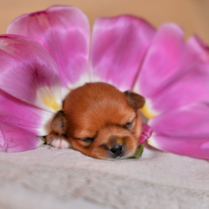 Flower Names For Dogs: Plus Nature Dog Names Puppy in petals