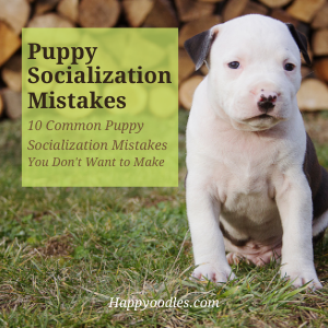 Puppy Socialization Mistakes - 10 Common Mistakes you don't want to make