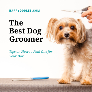 The Best Dog Groomer: How to Find One For Your Dog - Yorkie with groomer