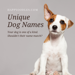 Happyoodles.com Unique Dog Names: How to Pick One