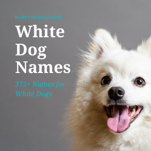 White Dog Names: 375+ Names for White Dogs title Picture