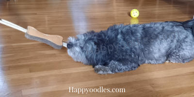 Bella playing Tug of War with the Tall Tails Natural Leather and Wool Tug Toy