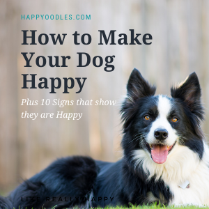 Is Your Dog Happy? The Secret to Making Them Happy